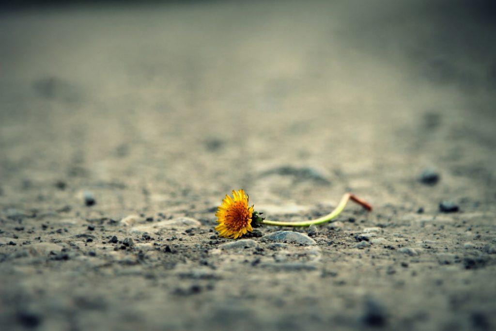 flower 1812470 1920